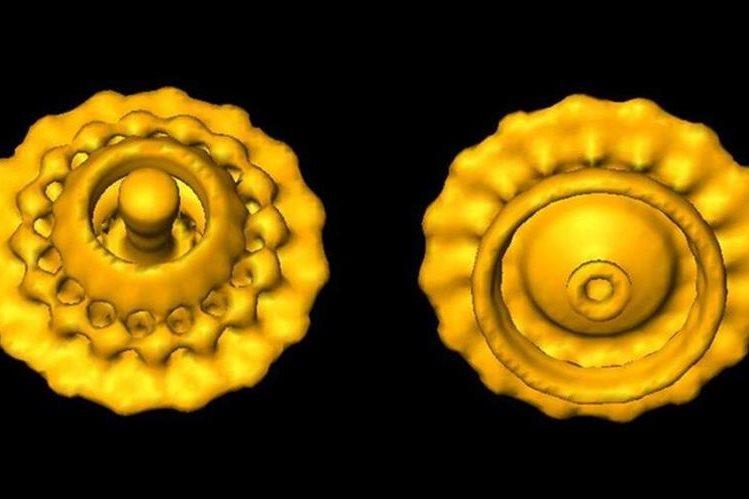 """Esta imagen de un """"motor"""" bacteriano fue lograda con la tecnología desarrollada por el trío. (GAVIN MURPHY/NATURE/SPL)."""
