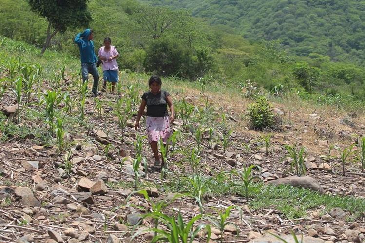 Las comunidades del área rural, en especial del Corredor Seco, son las que mayor dificultad tienen para acceder a agua entubada, debido a la falta de infraestructura en el país. (Foto Prensa Libre: Hemeroteca PL)