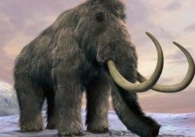 Los mamut de la isla de Saint Paul vivieron miles de años más que sus primos de tierra firme. SCIENCE PHOTO LIBRARY