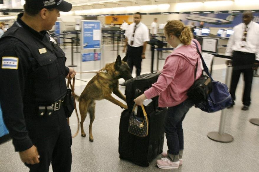 Perro policía olfatea equipaje de viajera, en Chicago. (Foto: AP)