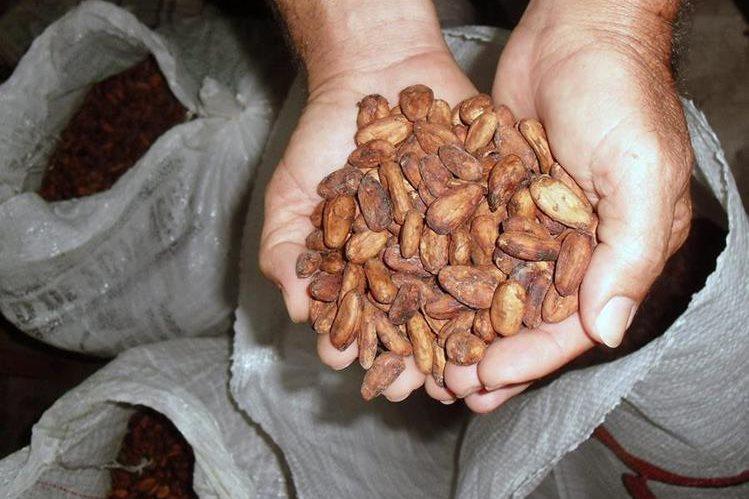 Científicos temen que en 30 años el chocolate desaparezca para siempre. (Foto Prensa Libre: Hemeroteca PL)