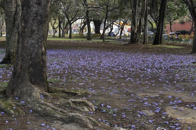Árboles en la Avenida de las AméŽricas, zona 14. (Foto Prensa Libre: Paulo Raquec)