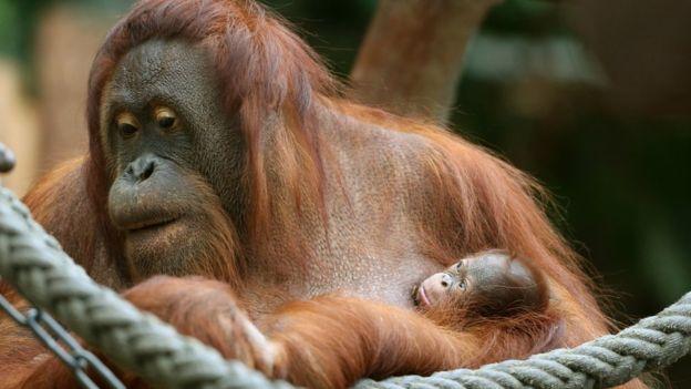 La idea del experimento es entender también el papel de las emociones en las relaciones entre los animales. (AP)