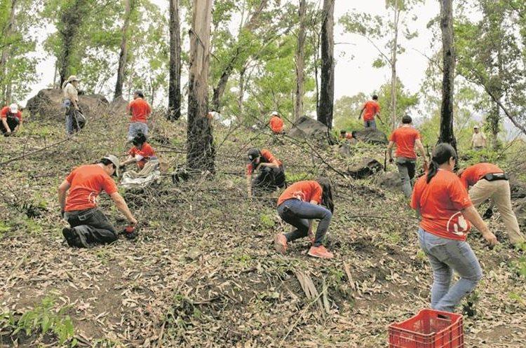 Expertos recomiendan promover campañas de reforestación, para evitar la erosión. (Foto Hemeroteca PL)