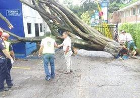Personal de la Municipalidad trabajó por más de una hora para retirar el árbol caído en la avenida Reforma y 14 calle de la zona 10. (Foto Prensa Libre: redes sociales)