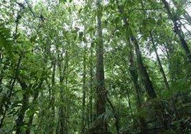 Cuidado forestal y desarrollo sostenible en Petén ha sido apoyado por diversas organizaciones. (Foto, Prensa Libre: Hemeroteca PL).