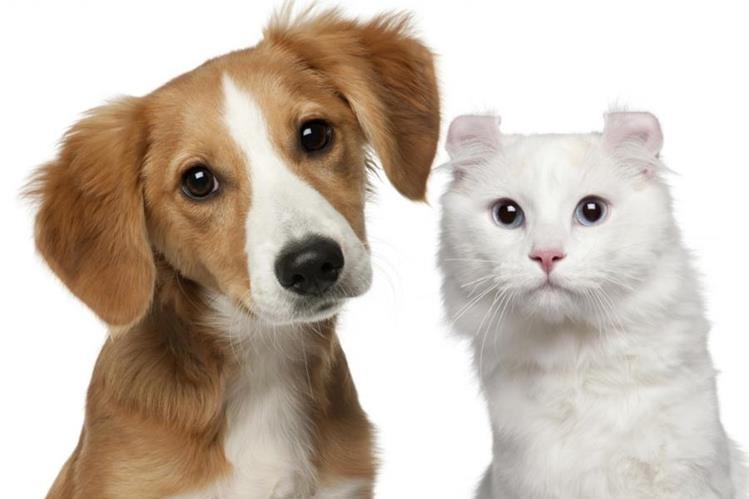 Las mascotas también son fumadores pasivos, por lo que el dueño tiene que tomar las medidas pertinentes para que el humo no afecte su salud.