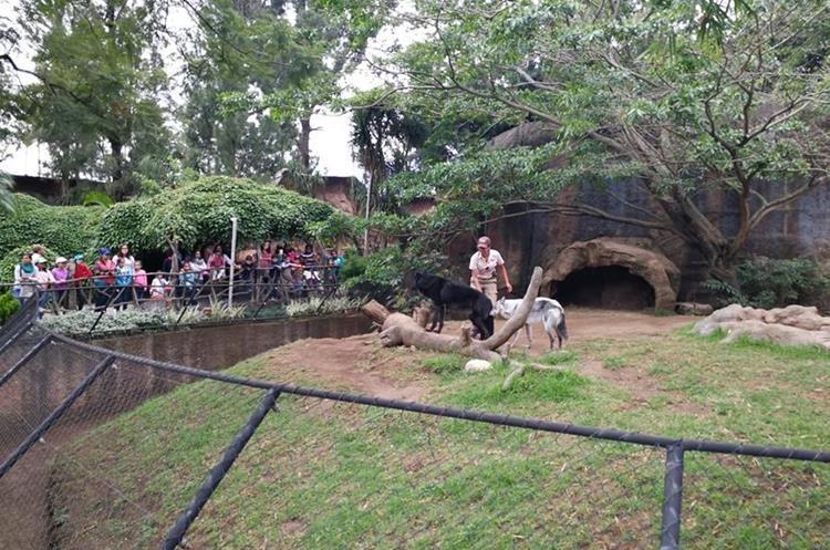 Visitantes al Zoológico la Aurora observan el cuidado que Lourdes brinda a los lobos. (Foto Prensa Libre: Oscar Fernando García).