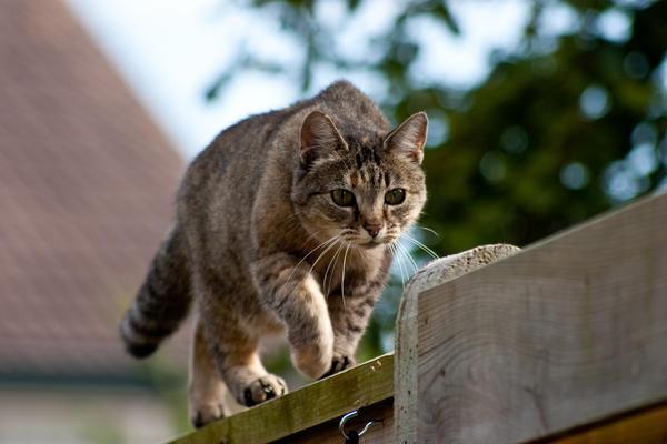 """<p>Un gato dejó un paquete con marihuana en la puerta de una casa en Nueva Zelanda. (Foto Prensa Libre: Archivo)<br _mce_bogus=""""1""""></p>"""