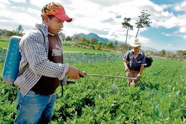 cada año se genera una fuerte discusión respecto del salario. El sector agrícola paga Q78.72.