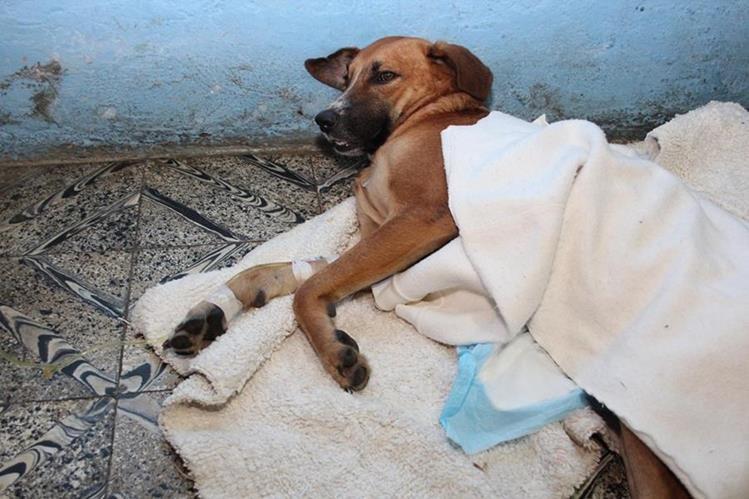 Gordito murió a causa de infecciones en las heridas. (Foto Prensa Libre: Eduardo Sam).