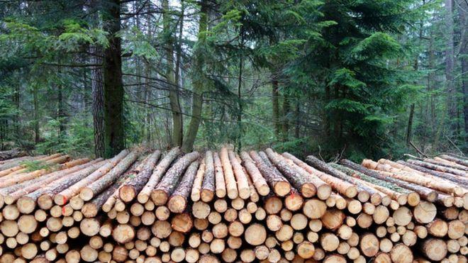 El 35% de los árboles talados se destina a la fabricación de papel y de cartón. (THINKSTOCK)