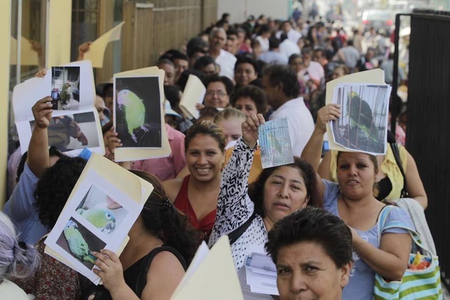 La mayoría de personas registró pericos. (Foto Prensa Libre: Hemeroteca PL)