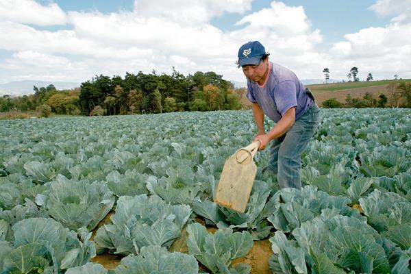 Los programas de Agricultura muestran retraso debido a los procesos de licitación, informaron autoridades de esa cartera.