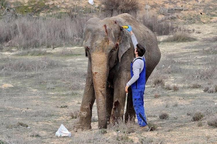 Los elefantes cortan la autopista en España