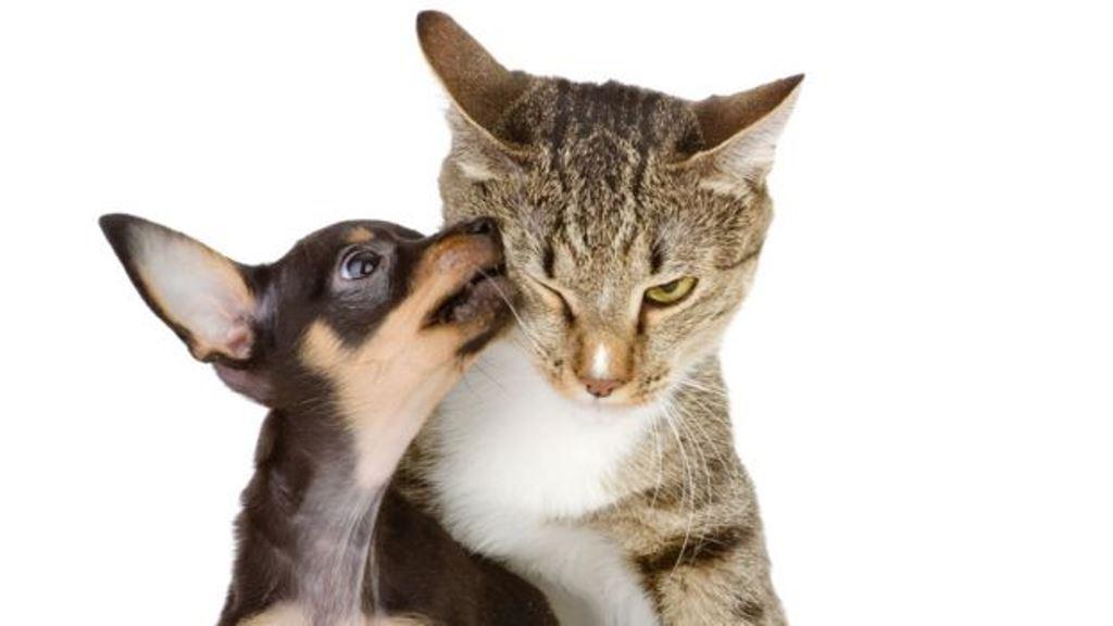 Lo importante es tener normas básicas de higiene como lavarse las manos siempre antes de comer, o no permitir que el perro esté en la mesa de comida. (THINKSTOCK)