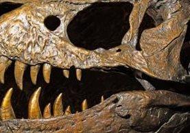 En el nuevo orden genealógico, el Tyrannosaurus rex cambia su clasificación. MILLARD H. SHARP