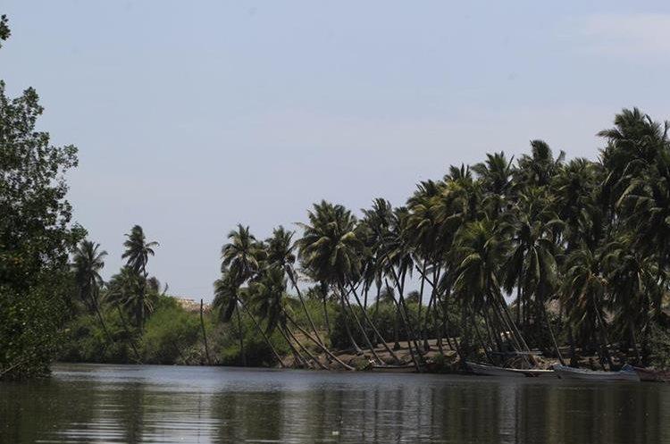 Los manglares rodean el Canal de Chiquimulilla, que tiene una extensión de 140 kms. (Foto Prensa Libre: Carlos Hernández)