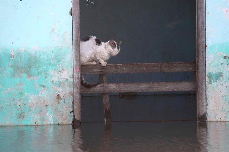 ASU01. ASUNCIÓN (PARAGUAY), 28/12/2015.- Vista de un gato que permanece al interior de una vivienda inundada en un barrio de Asunción (Paraguay) hoy, lunes 28 de diciembre de 2015. Por las crecidas de los ríos Paraguay y Paraná, la ciudad del país más castigada por la crecida es Asunción, donde hay unos 90.000 evacuados, según la municipalidad capitalina, aunque la Secretaria de Emergencia Nacional cifra en 70.000 el número de desplazados. La mayoría de esos damnificados viven en espacios proporcionados por el Gobierno desde que comenzara a subir el río, que de momento se mantiene en los 7,8 metros de altura. EFE/Andrés Cristaldo Benítez