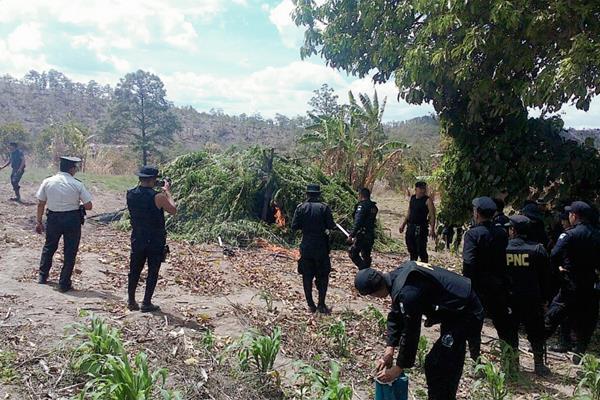 Autoridades queman plantación de marihuana en Momostenango, Totonicapán. (Foto Prensa Libre: Carlos Ventura)