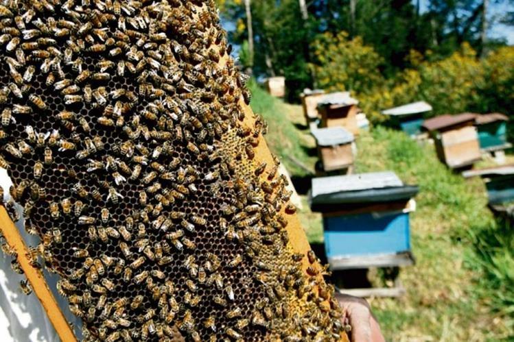 La Miel nacional es producto de buena calidad que goza de aceptación en varios mercados del mundo.