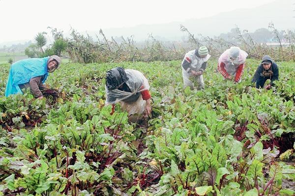 Los departamentos de Sololá y Retalhuleu recibieron capacitaciones para aprovechamiento de los residuos de productos agrícolas. (Foto Prensa Libre: Hemeroteca).