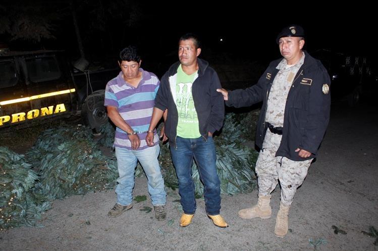 Los dos capturados junto a parte del pinabete decomisado en El Tejar, #Chiamaltenango. (Foto Prensa Libre: Víctor Chamalé).