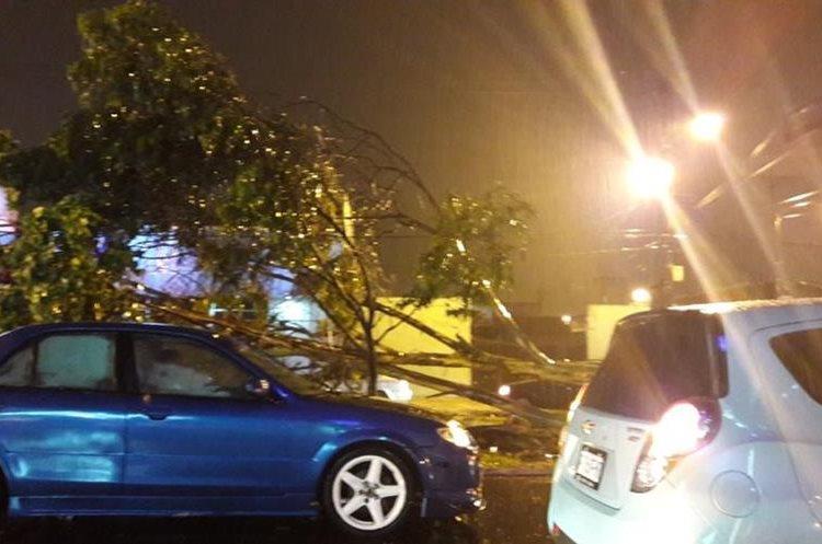 Árbol caído en la calzada Roosevelt y 12 avenida. (Foto Prensa Libre).