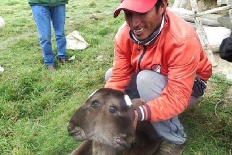 <em>La ternera de dos cabezas nació en la región de Cajamarca y no puede alimentarse ni mantenerse en pie. (Foto Prensa Libre: Twitter).</em>