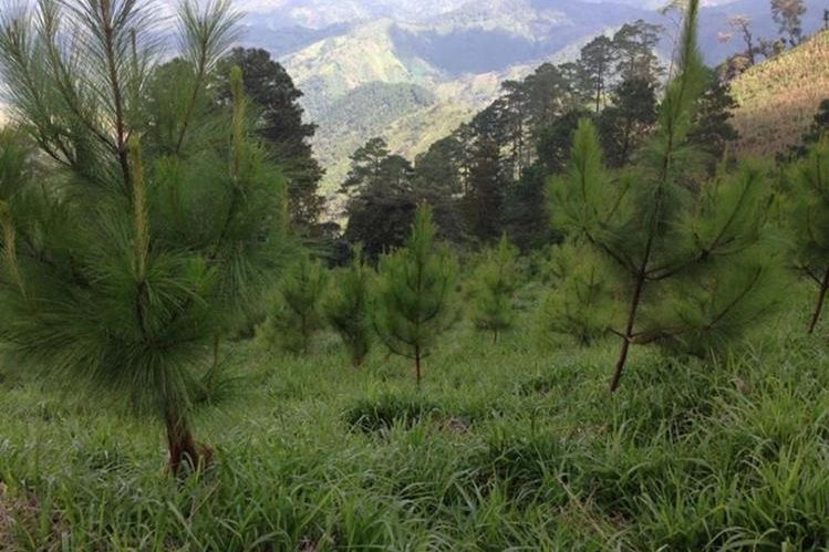 Área donde ocurrió el rescate del secuestrado en Olopa, Chiquimula. (Foto Prensa Libre: Edwin Paxtor).
