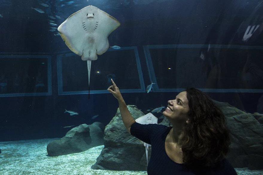 Una visitante observa en el acuario AquaRío en Río de Janeiro, Brasil. (Foto Prensa Libre: EFE).