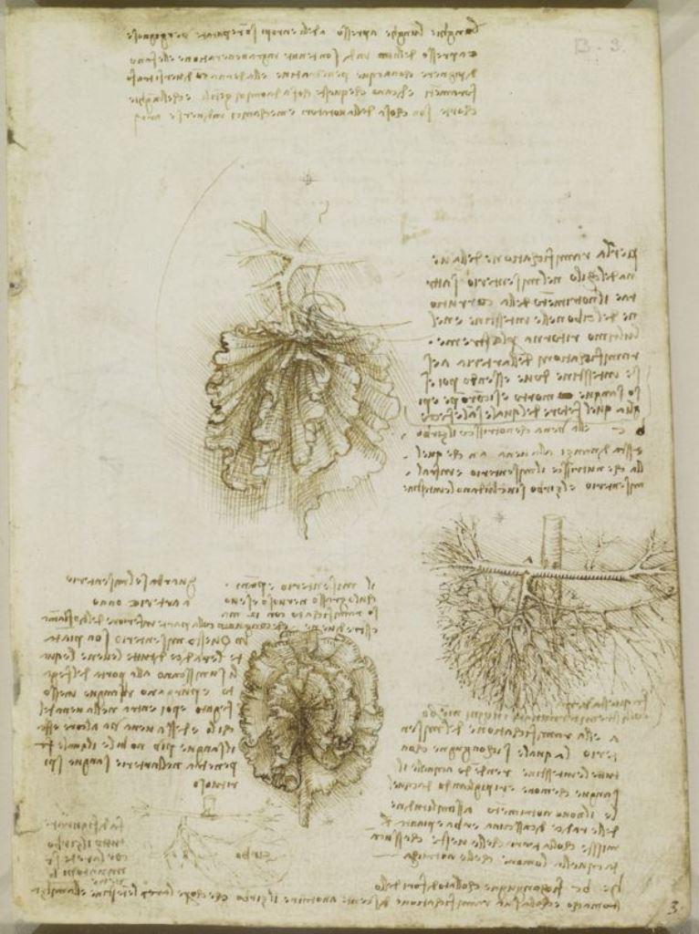 La primera mención del mesenterio se encuentra en los escritos de Leonardo, de alrededor de 1510 (ROYAL COLLECTION TRUST © HM QUEEN ELIZABETH II)