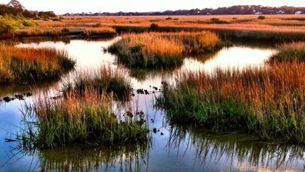 Las bacterias halomonas se encuentran con frecuencia en los pantanos. ALAMY