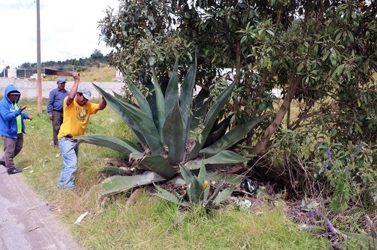 Los vecinos del valle de Palajunoj, Quetzaltenango, también limpian los arriates.  (Foto Prensa Libre Carlos Ventura)