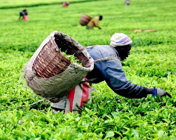 La agricultura se reciente por la economía d e China.