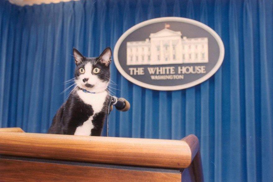 Gato Socks, en la Casa Blanca.