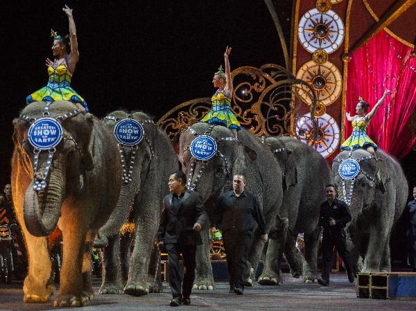 """<span>Los elefantes</span> <span class=""""hps"""">son presentados</span> <span class=""""hps"""">durante una actuación</span> <span class=""""hps"""">en el circo.</span>"""