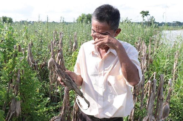 Ovidio Tahual, un campesino que perdió todas sus cosechas en Suchitepéquez. (Foto Prensa Libre: Cristian Icó)