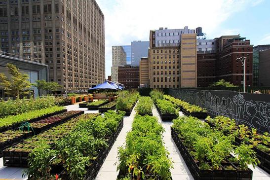 Las azoteas de edificios se convierten en un lugar ideal para colocar cultivos. (Foto Prensa Libre: Energía Limpia)