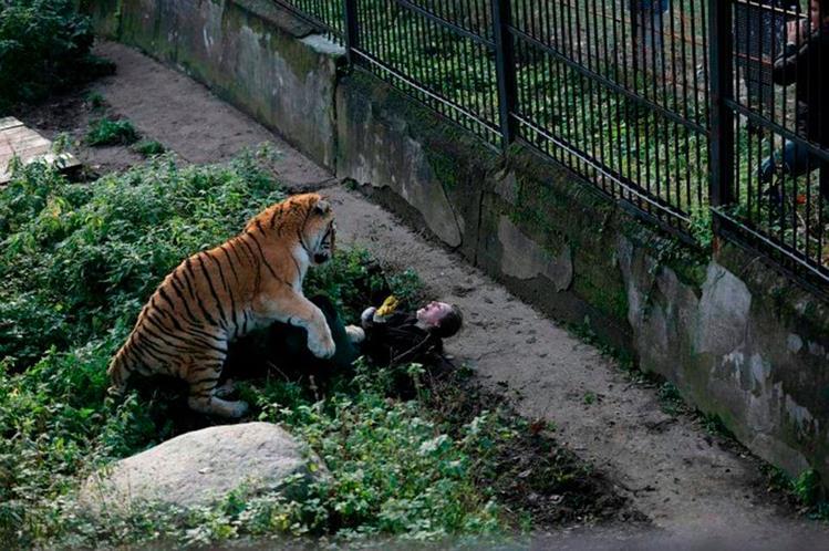 En video: escena de pánico cuando tigre ataca a cuidadora