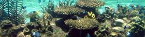 Gran Barrera de Coral en Australia.