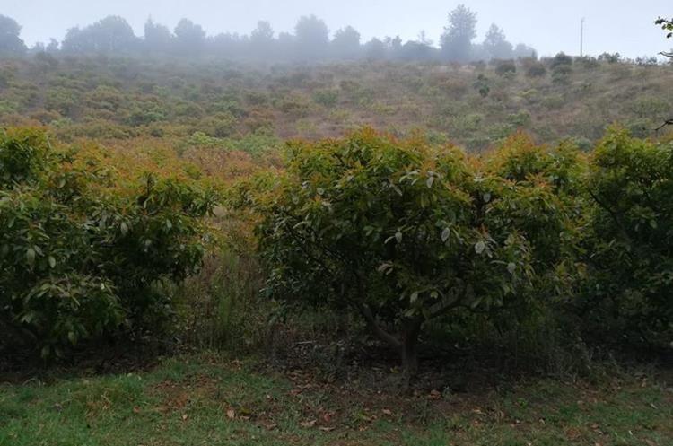 Los terrenos habrían sido adquiridos a precios que oscilan entre los dos mil y tres mil quetzales.