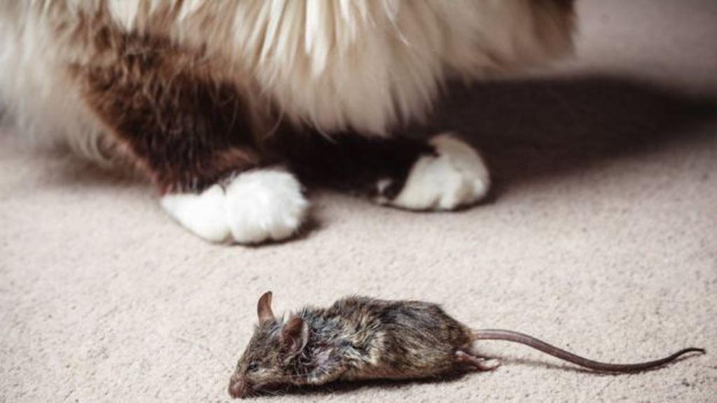 ¿Quién dijo que los gatos son egoístas, si te traen lindos regalitos? THINKSTOCK