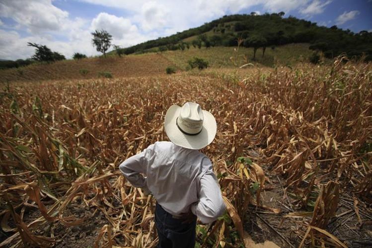 La canpicula prolongada a afectado a varios departamentos del oriente, occidente y meseta central. (Foto Prensa Libre: Hemeroteca PL)