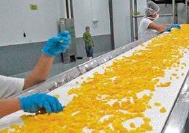 La planta procesará para el próximo trimestre un millón de mango congelado que será exportado a Estados Unidos.