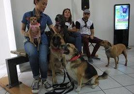 Algunas mascotas fueron llevadas a la conferencia de prensa en la zona 2 de la capital, donde se anunció la feria de adopciones. (Foto Prensa Libre: Esbin García).