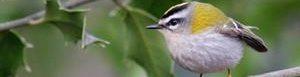 Cambio climático afecta a las aves.