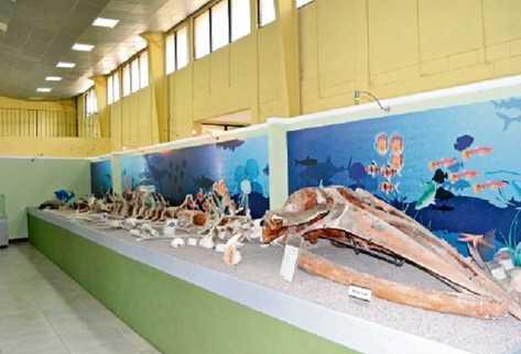 Esqueletos de un gigantesco mastodonte, de un manatí y de una ballena.