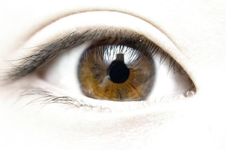 La córnea ayuda a refractar la luz, lo cual permite ver.
