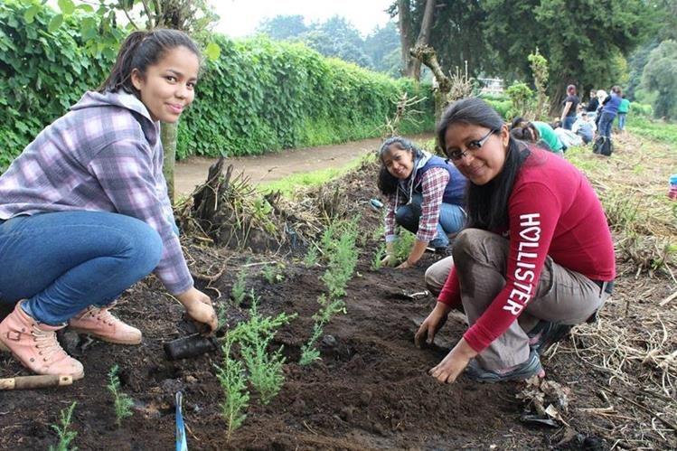 Voluntarios participan en una jornada de reforestación. (Foto Prensa Libre: Cortesía).